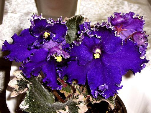 Бисероплетение схемы цветы гиацинт - Делаем фенечки своими руками.